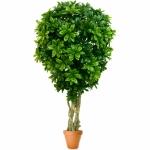 Растение искусственное ПИТТОСПОРУМ
