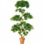 Растение искусственное ПИТТОСПОРУМ шапочный