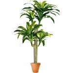 Растение искусственное Тропическое ДРАЦЕНА массенджеана