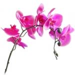 Растение искуственное Цветы ОРХИДЕЯ малая